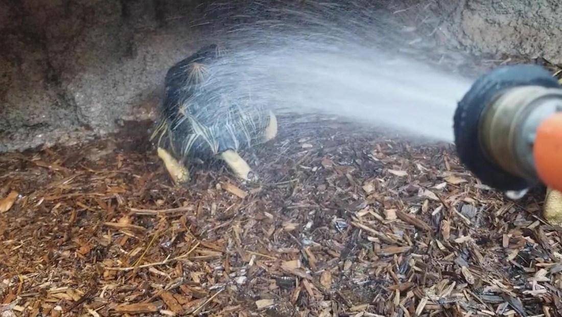 Graban a una tortuga 'bailando' en acuario de EE.UU.