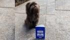 Chewy, el perro que perdió su pasaporte en México