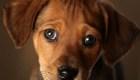 ¿Se han vuelto más inteligentes los perros?