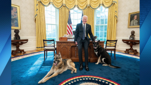 Biden: Mis perros tienen acceso privilegiado a la oficina oval