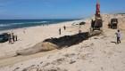 """""""Black Sea"""": Environmental disaster in Israel"""