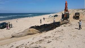 """""""Marea negra"""": desastre ecológico en Israel"""