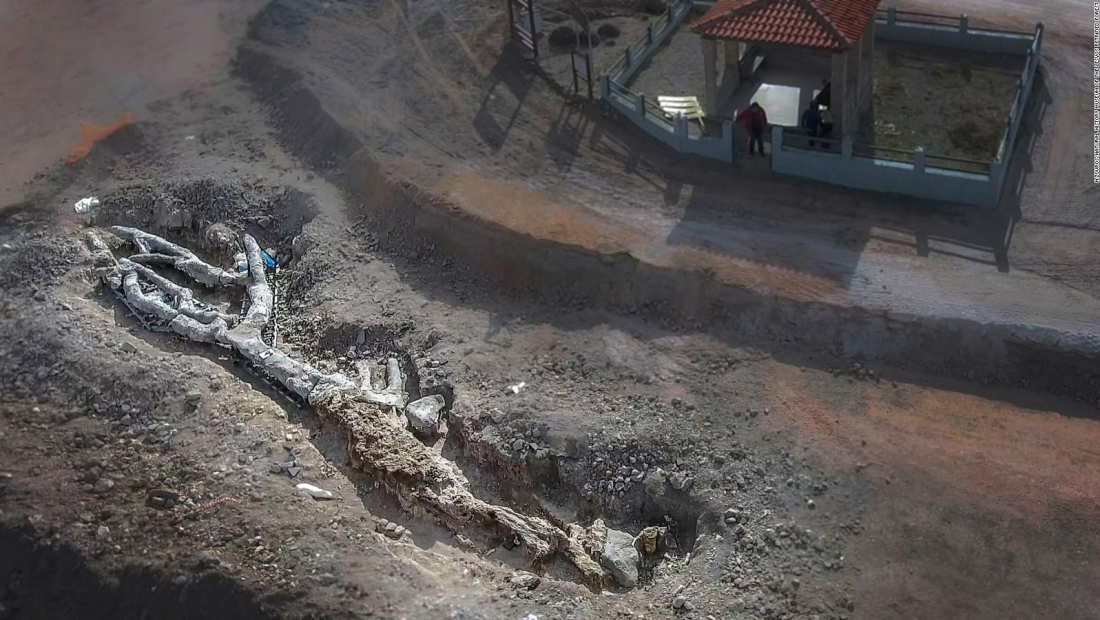 Descubren árbol de millones de años intacto en Grecia