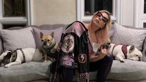 Lady Gaga robo perros paseador