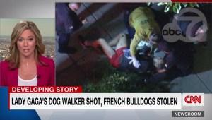 Disparan al paseador de perros de Lady Gaga, roban dos animales