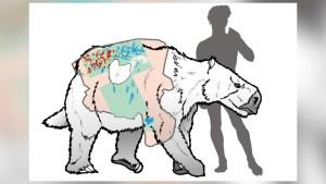 Analizan la piel de un perezoso gigante milenario
