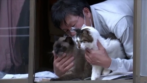 El hombre que cuida a los gatos de Fukushima