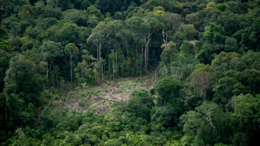 Bosque amazónico en peligro, más de lo que se pensaba