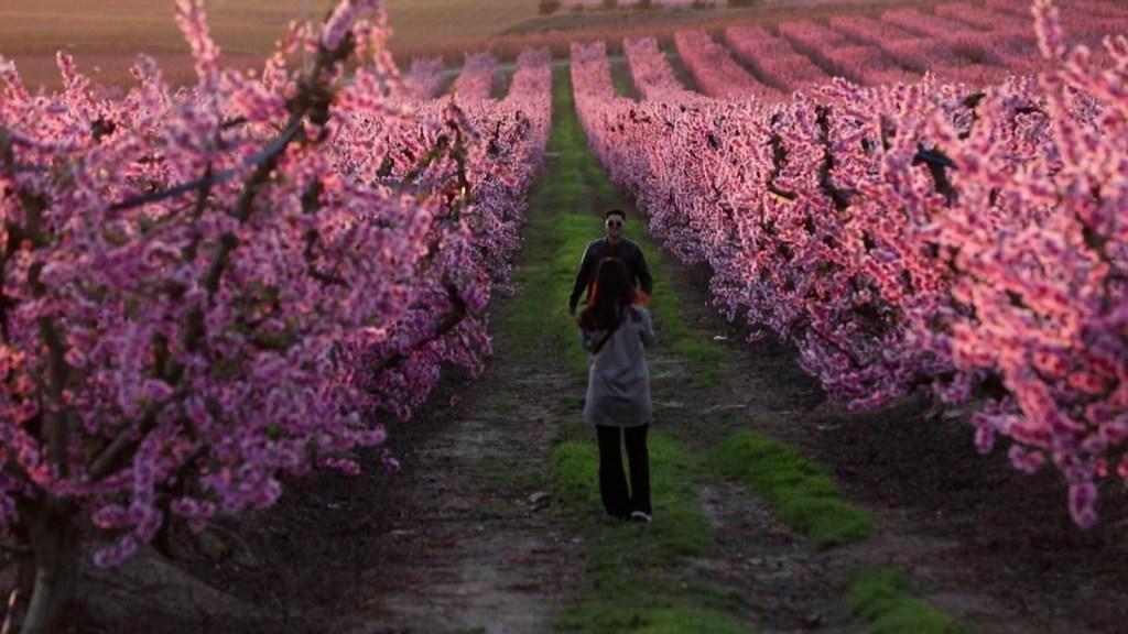 Así llega la primavera en España