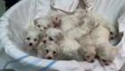 Rescatan a 101 perritos de una red de tráfico animal