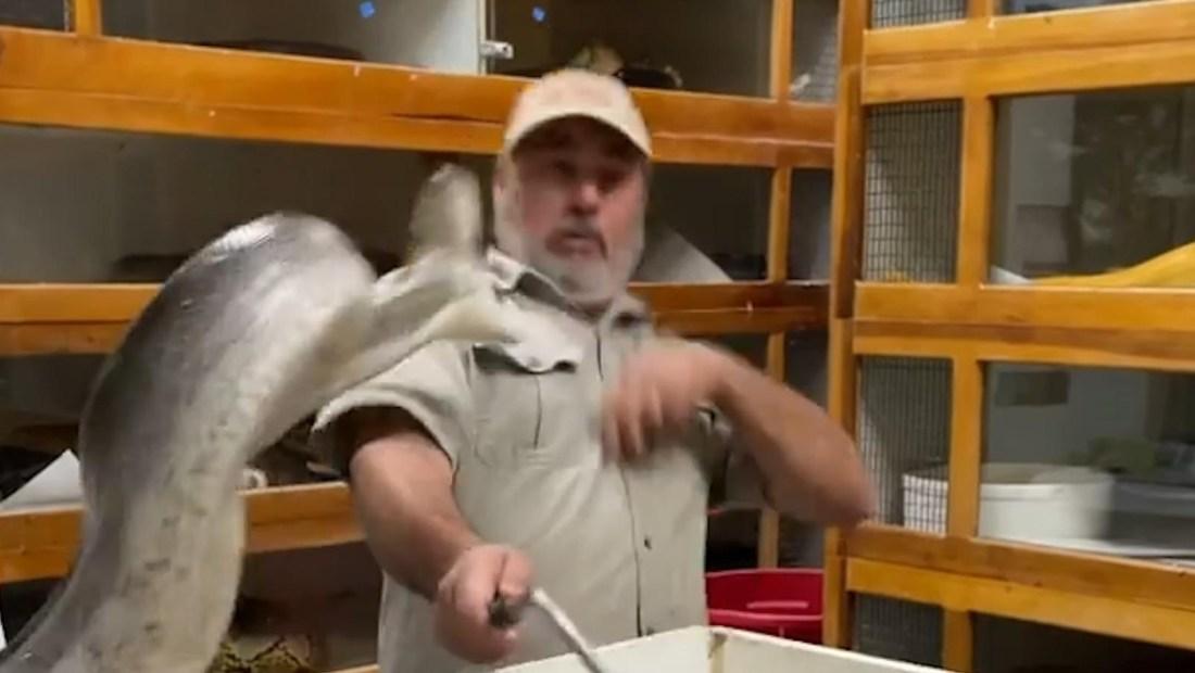 Mira el ataque de una serpiente al dueño de un zoológico