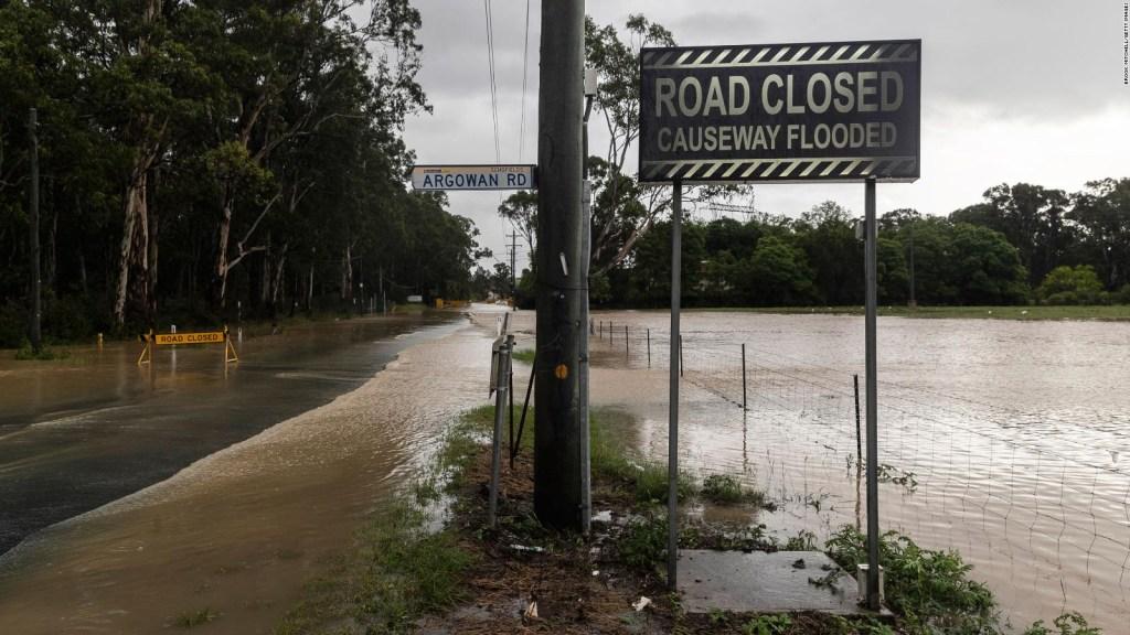Arañas y serpientes buscan refugio por inundaciones