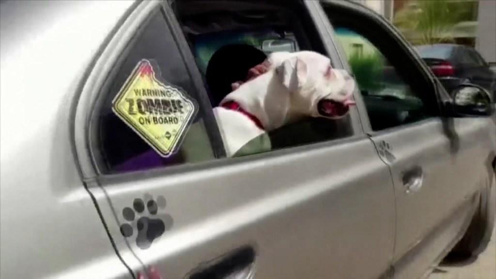 Taxi exclusivo para mascotas en Egipto