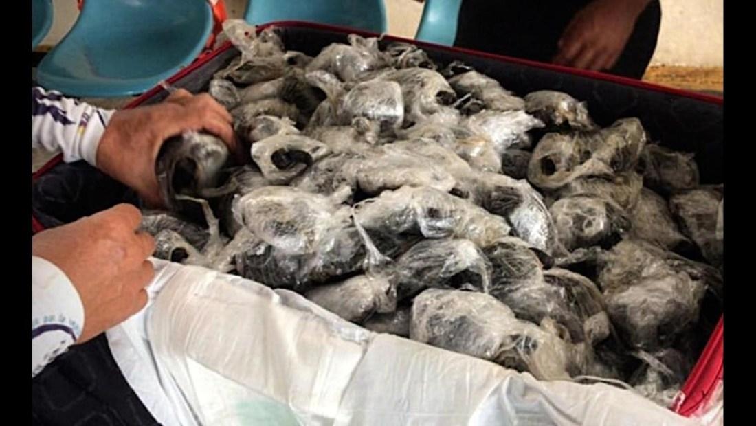 Detienen contrabando de tortugas gigantes de Galápagos