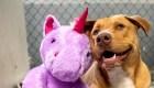 Encuentra hogar perro que robó un peluche repetidamente
