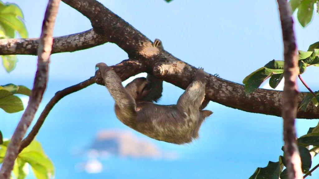 Viajar Costa Rica covid-19