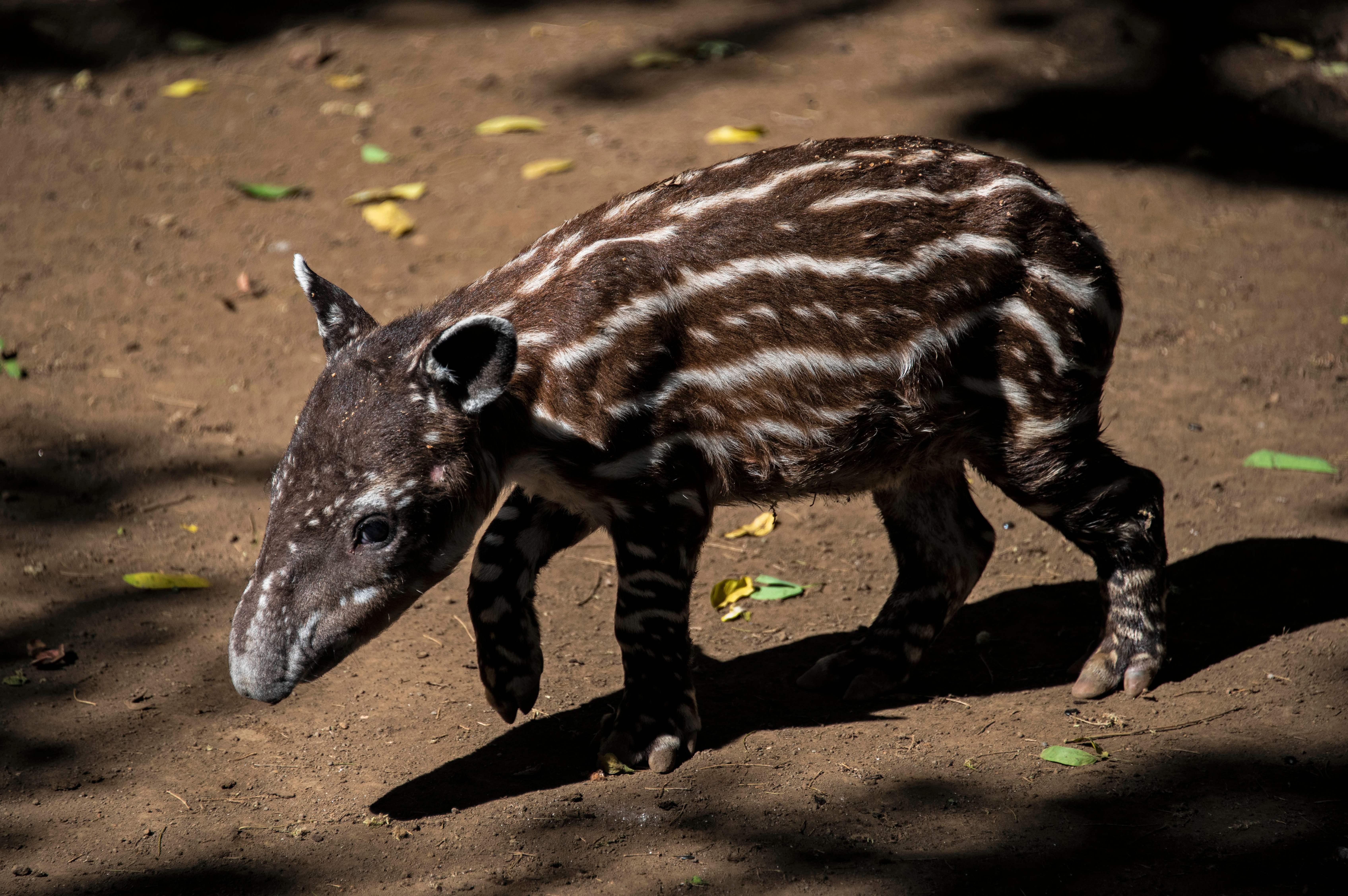 nicaragua-animales-peligro-extinción-dos.jpg