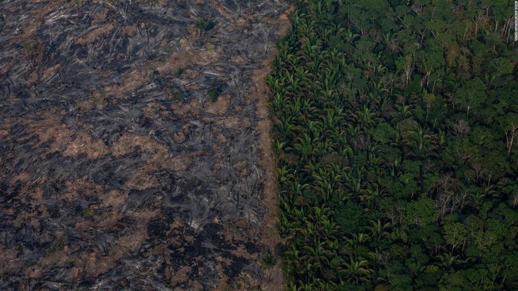 La destrucción de bosques tropicales aumenta en 2020