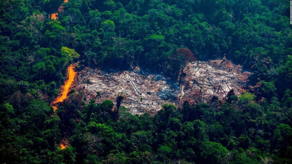 Reducir la tala ilegal en el Amazonas es poco probable
