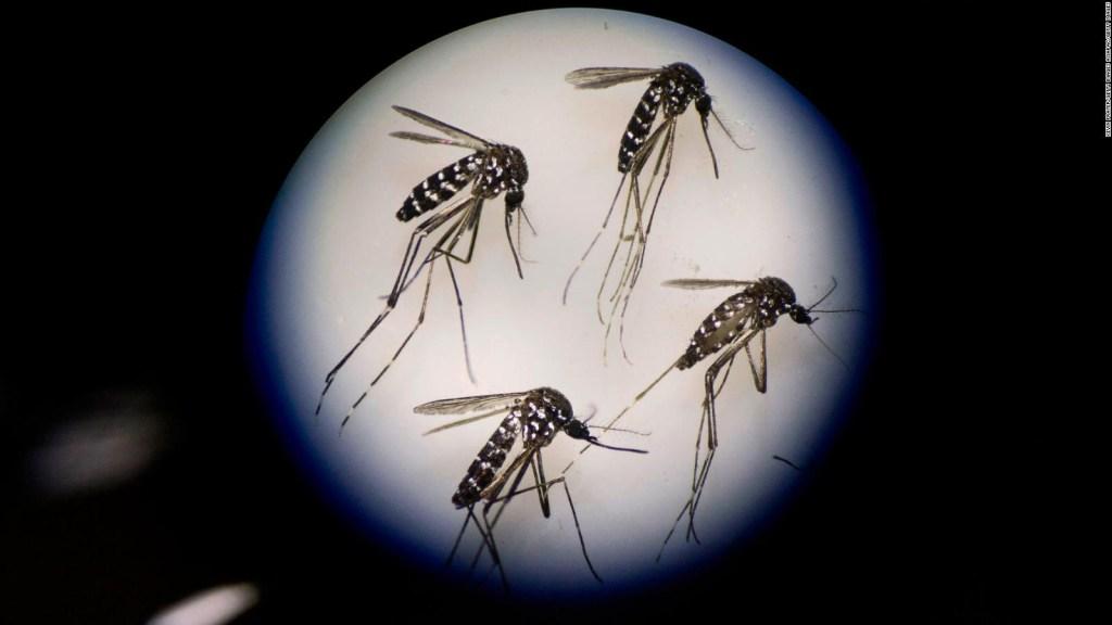 Florida: liberan 750 millones de mosquitos de laboratorio