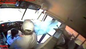 ¡Increíble! Venado se estrella contra bus escolar