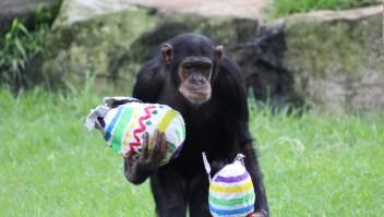 Animales buscan huevos de Pascua