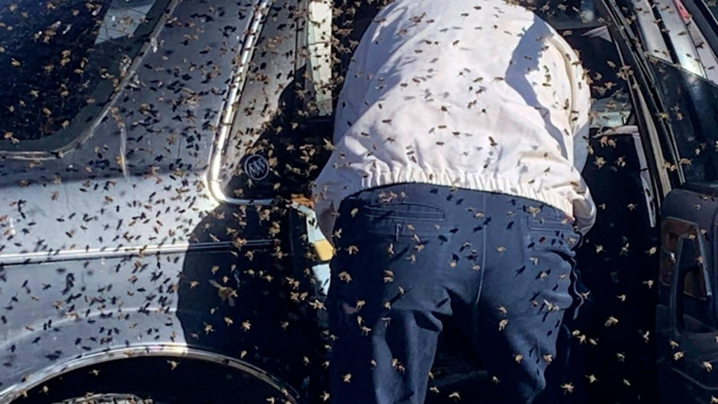 Un auto invadido por más de 15.000 abejas