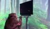 Neuralink afirma que monos pueden jugar por telepatía
