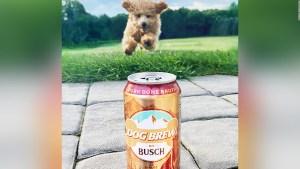 Tu perro podría ser catador de cerveza y te decimos cómo