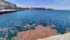 Mira esta invasión de medusas en la costa de Italia