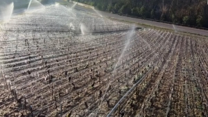 Viticultores de Francia pierden cosecha por helada severa