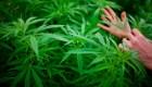 La marihuana rompe barreras en varios deportes