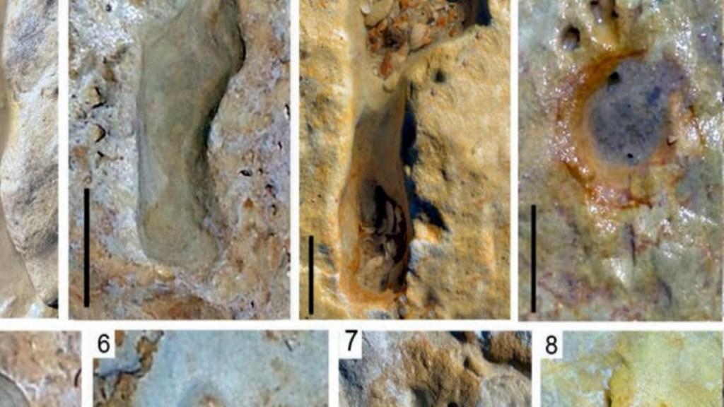 Encuentran huellas de niños neandertales en España