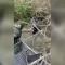 Así rescató la Patrulla Fronteriza a dos niños hondureños inmigrantes