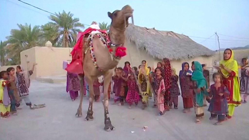 Un camello lleva libros a los niños en el desierto