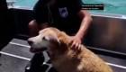 Rescatan perrita que estaba a punto de morir en altamar