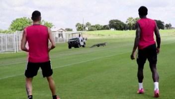 Cocodrilo sorprende a jugadores de fútbol