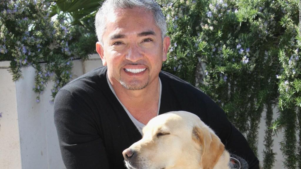 De sans papiers aux États-Unis au célèbre dresseur de chiens