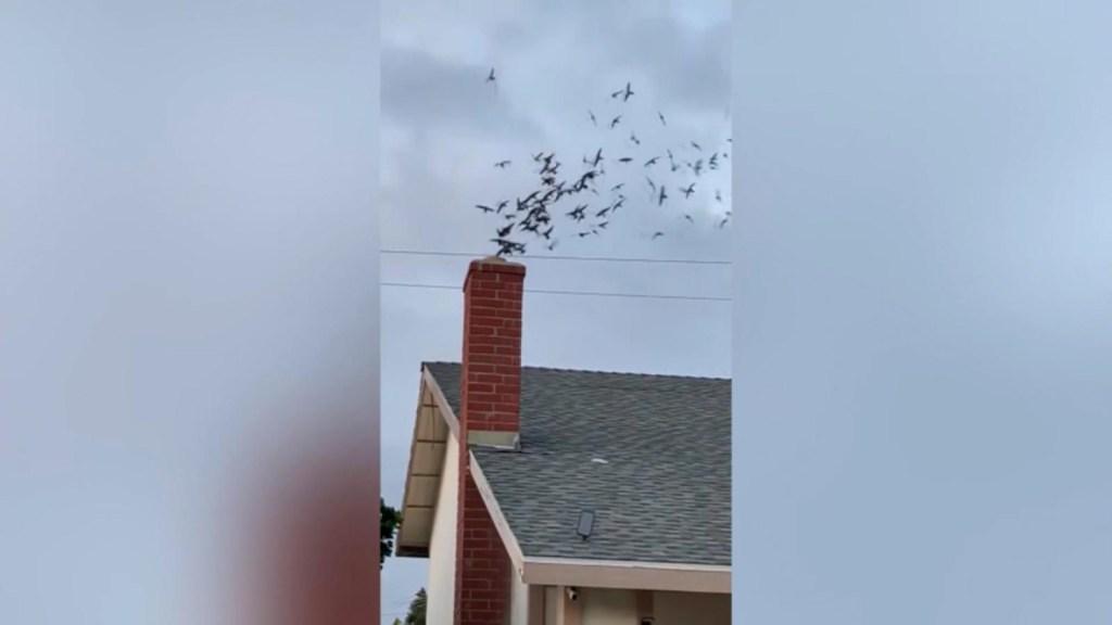 Cientos de pájaros invaden residencia en California