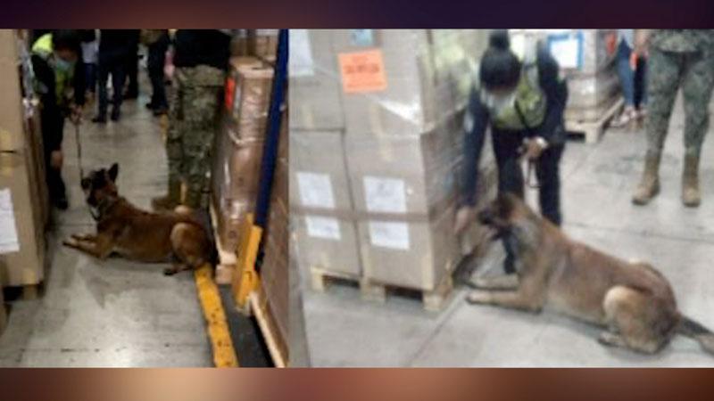 Perro policía detecta cocaína en aeropuerto de México