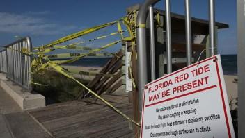 EE.UU.: la marea roja preocupa en Florida