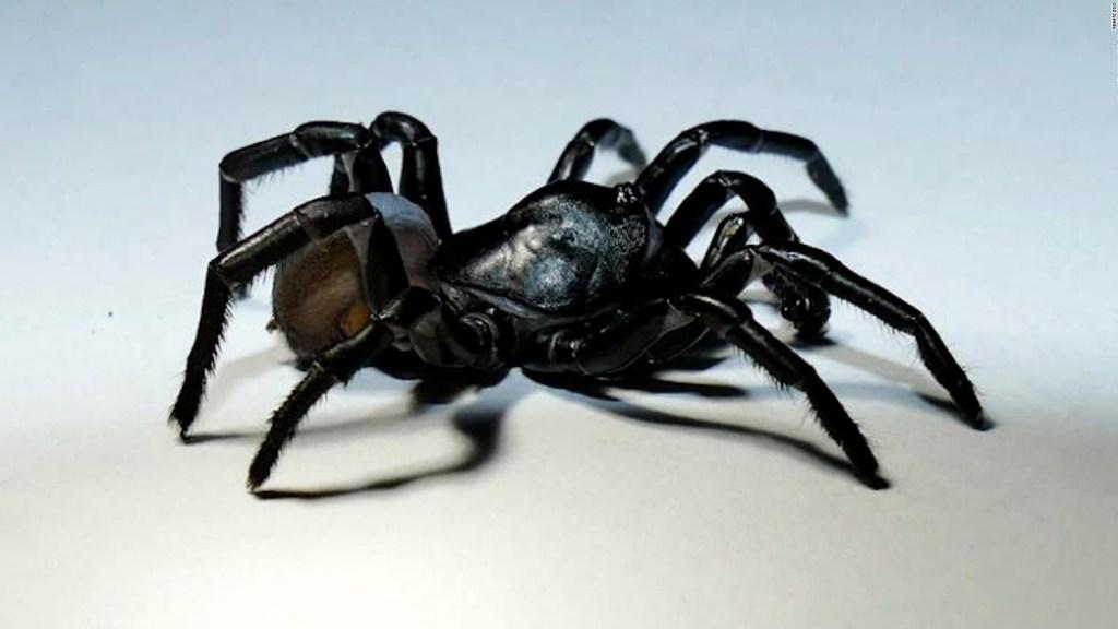 Encuentran una nueva especia de araña