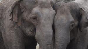 Estos elefantes de circo tienen un nuevo hogar