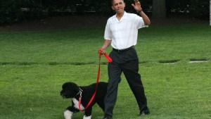 Así recordaron los Obama a Bo, su perro fallecido