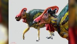 Mexicanos descubren una nueva especie de dinosaurio
