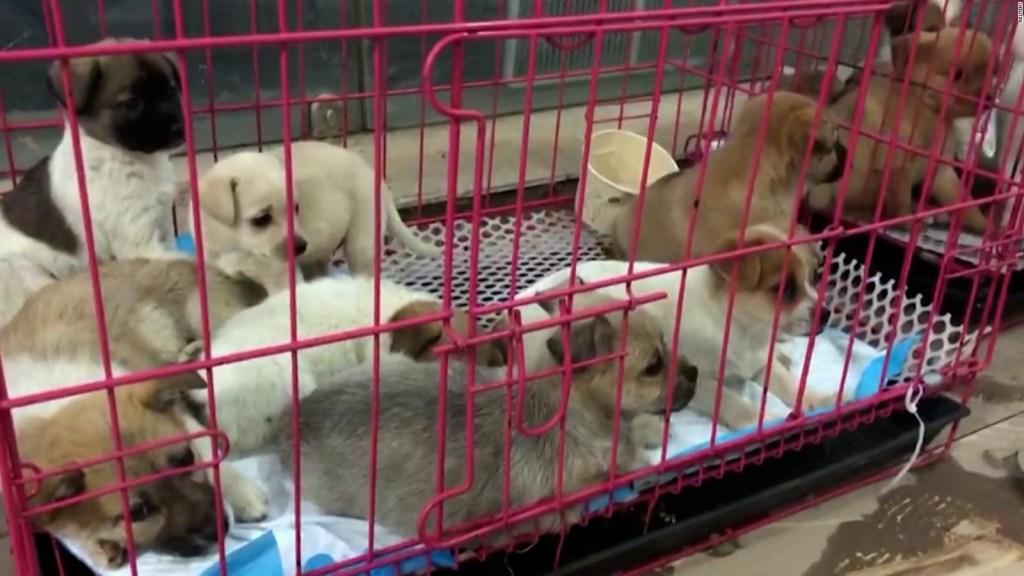 """Indignación por venta de """"cajas misteriosas"""" con animales"""