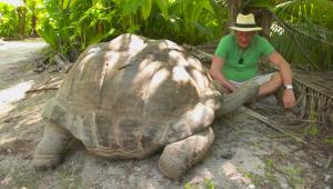 Mira a la tortuga errante más antigua y pesada del mundo