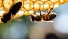 ¿Por qué son tan importantes las abejas?