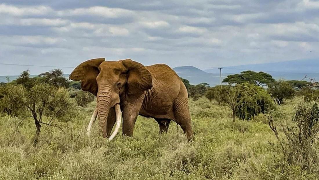 Kenya contará los animales de sus parques nacionales