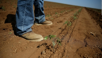 La sequía asfixia a agricultores en California